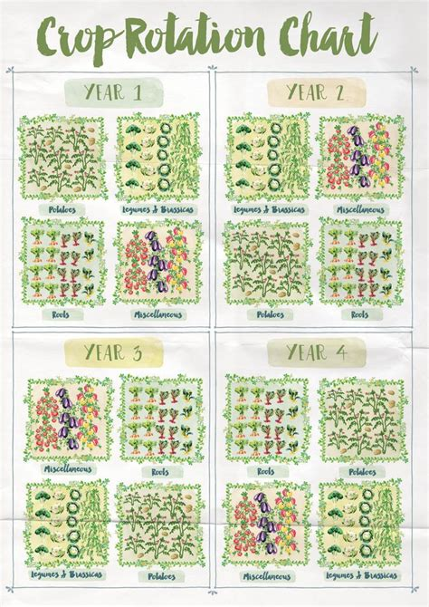 Vegetable Garden Crop Rotation 13 Best Crop Rotation Images On Crop Rotation