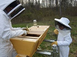 top bar beehive plans mother earth news a season in the life of top bar beekeeping homesteading