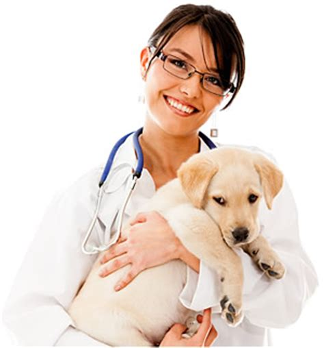 vet net vet supplies products online my pet warehouse