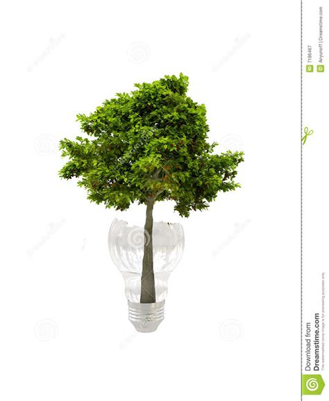 bulb tree tree in bulb royalty free stock photography image 7186467