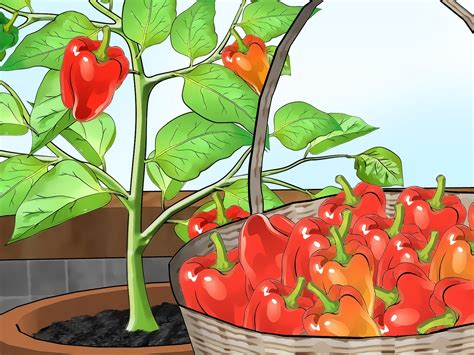 most difficult plants to grow grow bell peppers indoors container gardening the plant