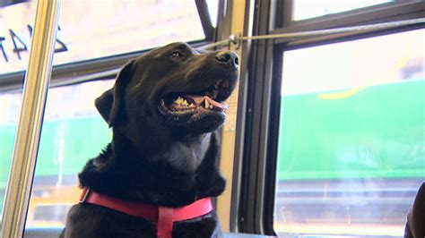 dogs eclipse meet eclipse the who figured out how to ride the all by herself abc13
