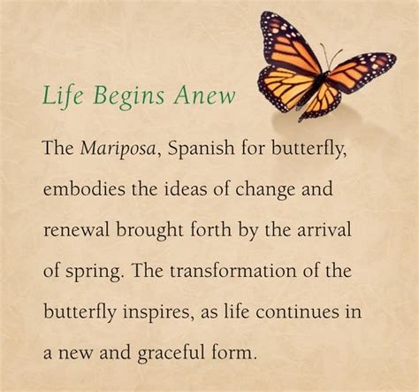 design inspiration meaning the meaning behind the mariposa inspiration behind many