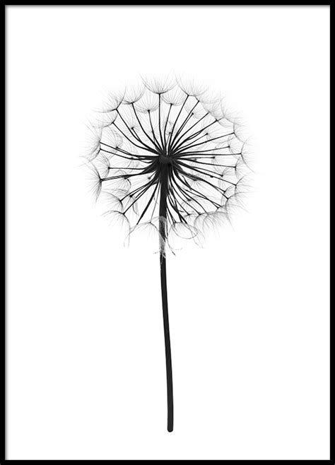printable posters black and white botanical poster print with photograph of a dandelion