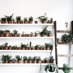 indoor plant ideas images indoor plants house