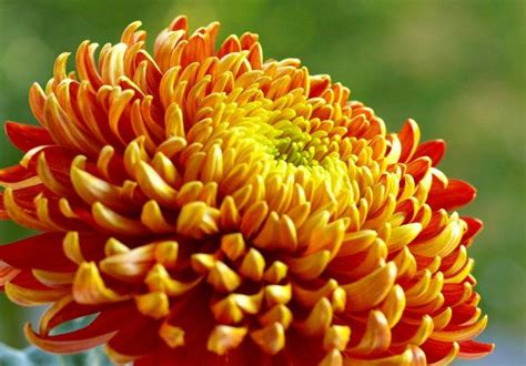 Schnittblumen Im Herbst by Pflanzentrends Die Sch 246 Nsten Stauden Und Schnittblumen