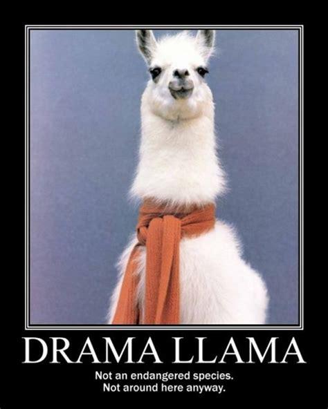 Drama Llama Meme - drama lama dump a day