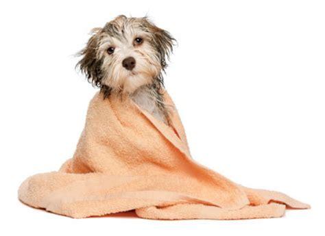 puppy washing washing tips the bark