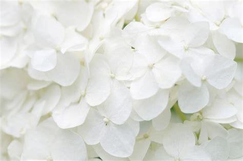 imagenes el blanco el color blanco con la quot e quot de