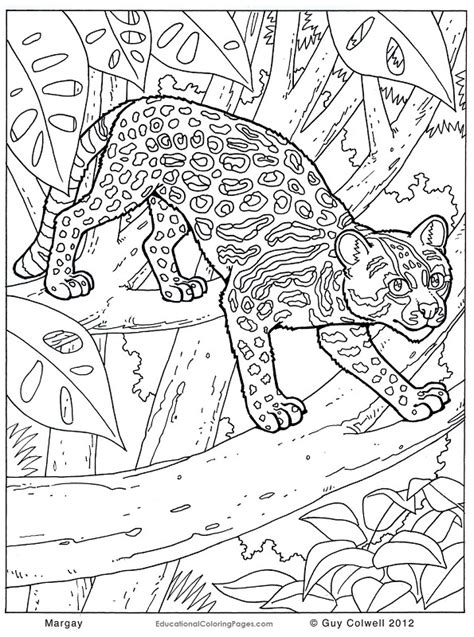 Patterned Animal Coloring Pages by Animal Scen Pattern Colouring Pages