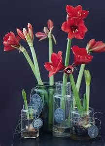 dekoration mit amaryllis zwiebel look bild 4 living at home
