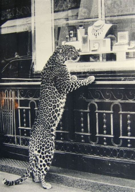 Window Shopping by Leopard Window Shopping Spectacles