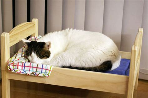 Cat Mattress by Japanese Cat Owners Re Purposed Ikea S Doll Beds For Cats