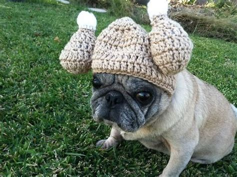 happy thanksgiving pug 12 best images about pugs in wigs on best mullet wig new haircuts and