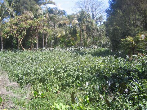 botanic gardens auckland auckland botanic gardens