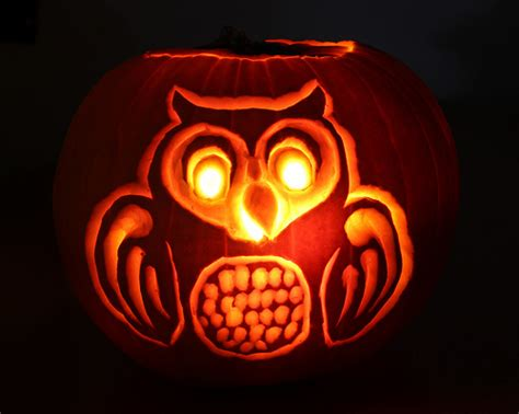 pumpkin owl pumpkin owl flickr photo