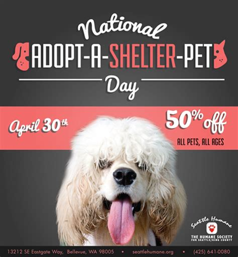 adopt a nyc national adopt a shelter pet day events from nyc to l a healthy paws pet insurance