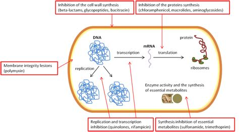 antibiotic drug delivery systems   intracellular