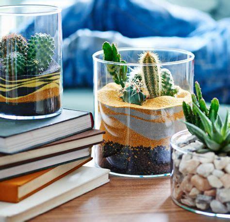 vasi per cactus vasi in vetro con giardini in miniatura di cactus e piante