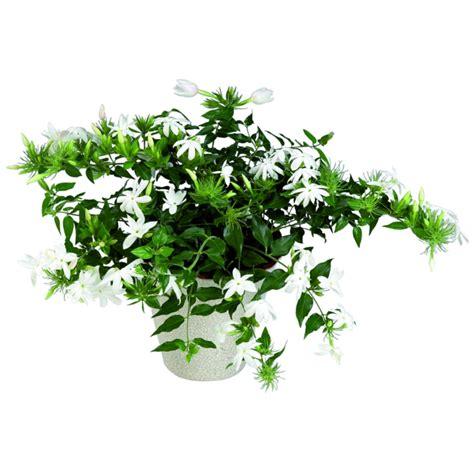 zimmerpflanzen schlafzimmer zimmerpflanzen schlafzimmer gesundheit goetics