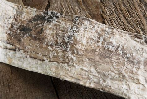 How To Make Birch Bark Paper - snowy birch bark paper ribbon 2 quot x 6