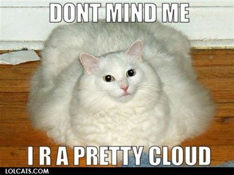 Lolcat Meme - lolcats lol cats photo 32524592 fanpop