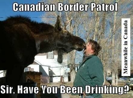 Canadian Moose Meme - 1000 images about meanwhile in canada on pinterest