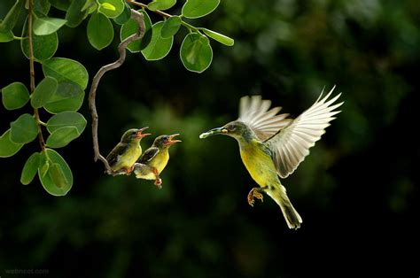 best wildlife photography 30 award winning photography exles for your