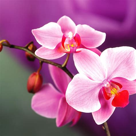 orchid facts facts about orchids blossoming gifts blog