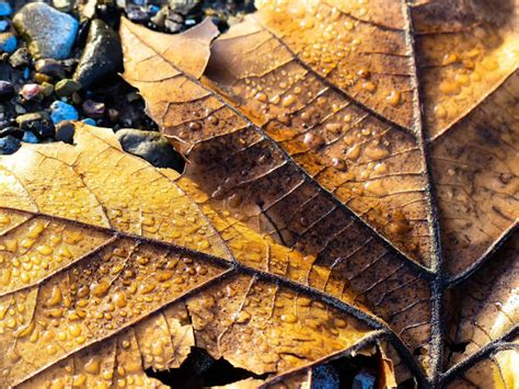 earthy colors gale s photo earthy colors