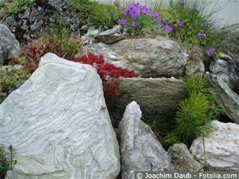 steingarten pflanzenauswahl steingarten anlegen und pflegen gartentipps