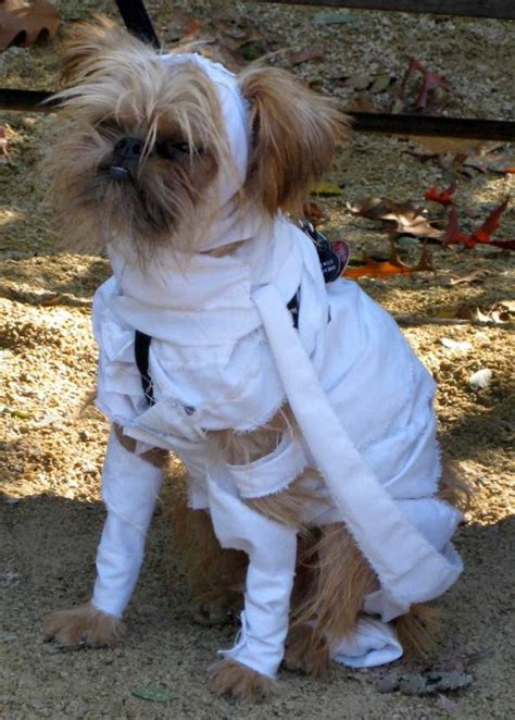 mummy dogs costume ideas 2016 pink lover