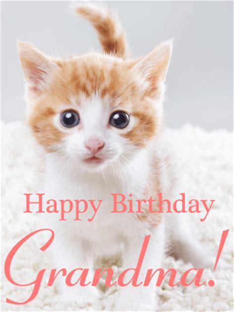 lovable cat happy birthday card  grandma birthday