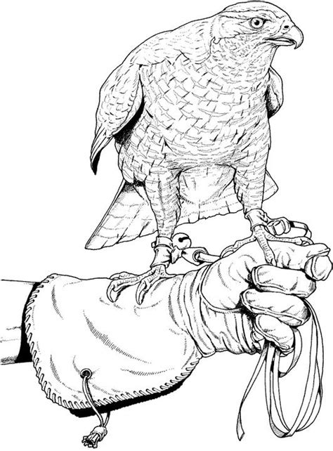 Free Coloring Pages Of Birds Of Prey | birds of prey coloring pages free printable coloring pages