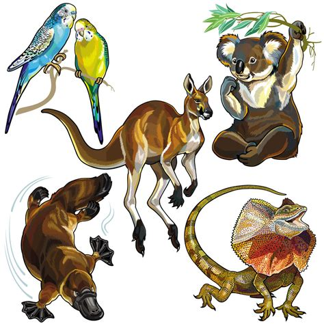 卡通澳洲动物模板下载 图片编号 20140414044741 陆地动物 生物世界 矢量素材 聚图网 juimg com