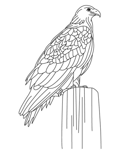 martial eagle coloring pages golden eagle coloring page coloring home