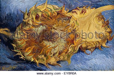 vincent van gogh 1853 1890 sunflowers by vincent van gogh 1853 1890 oil on canvas 1888 stock photo royalty free image