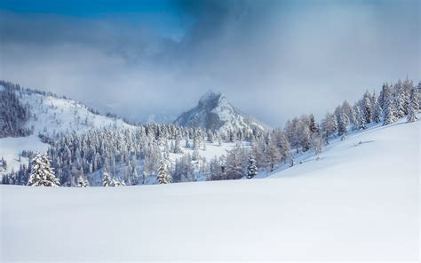 images forest snow cloud cloudy peak mountain
