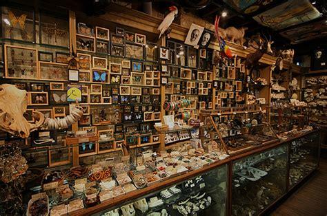 Obscura Cabinet De Curiosité by Wunderkammer Wunderkammer