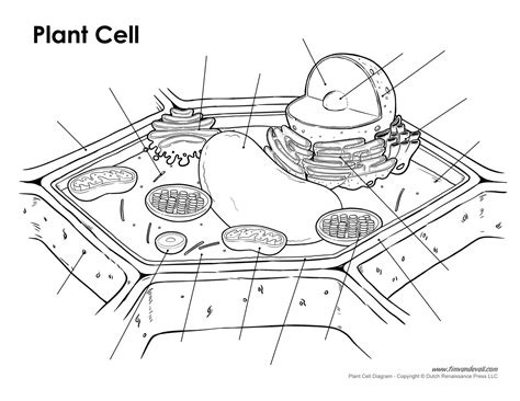 Galerry printable blank plant cell