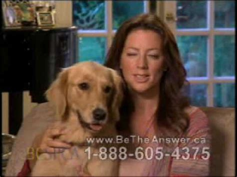 In The Arms Of An Angel Meme - sarah mclachlan spca commercial youtube