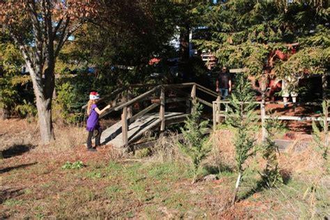 ponzi christmas trees marin u cut tree farms in petaluma marin mommies