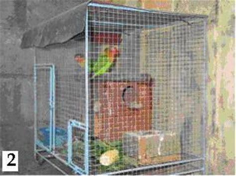 Kandang Kotak Lb 1 q a penangkaran lb 1 sangkar dan gangguan klub burung