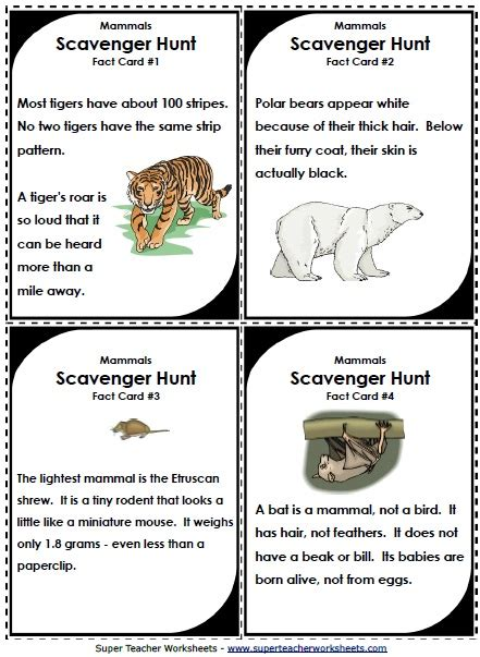 printable animal fun facts scavenger hunts make learning about animal classifications