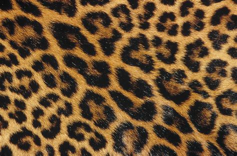Jungle Home Decor Image Gallery Jaguar Skin