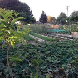 Vegetable Garden Greengrocers 12343 213th St Hawaiian Vegetable Gardening In Hawaii