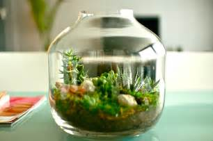 How To Decorate A Fish Bowl Vase Ladybird Amp Fellow Terrarium Fever Baby