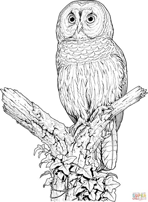 realistic owl coloring page perched barred owl coloring page free printable coloring