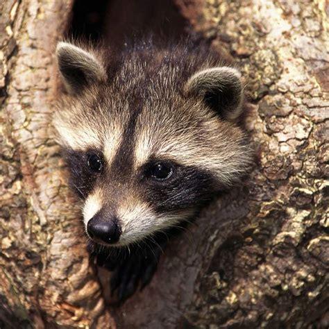 imagenes de animales nuevas especies las especies invasoras que amenazan el ecosistema espa 241 ol