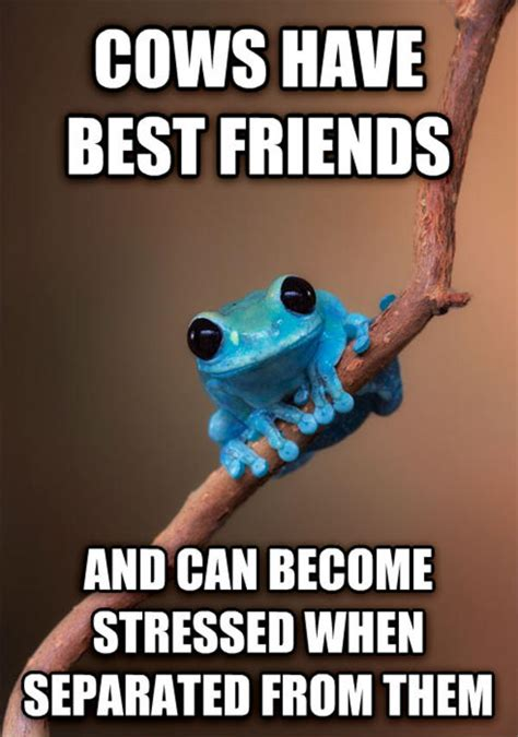 Fact Frog Meme - image 679215 small fact frog know your meme